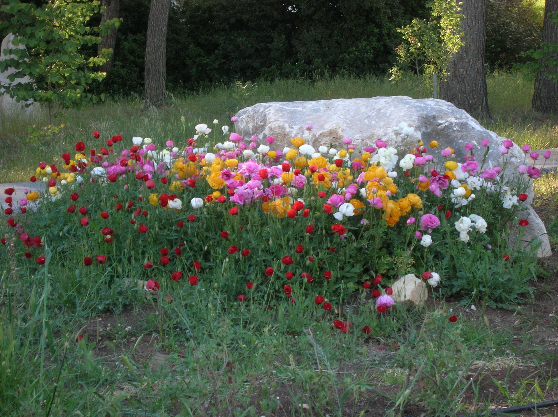 פרחים וסלע