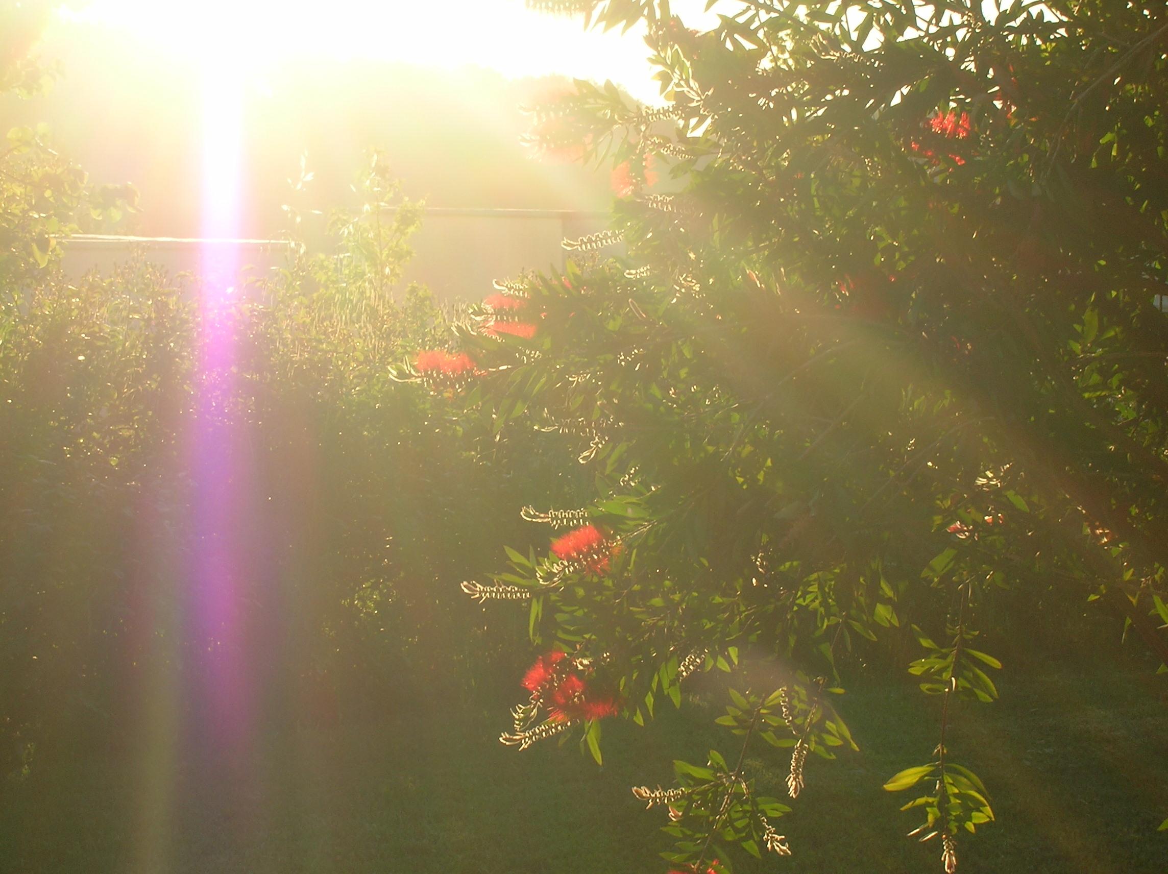 קרן אור של בוקר מעירה את החיים