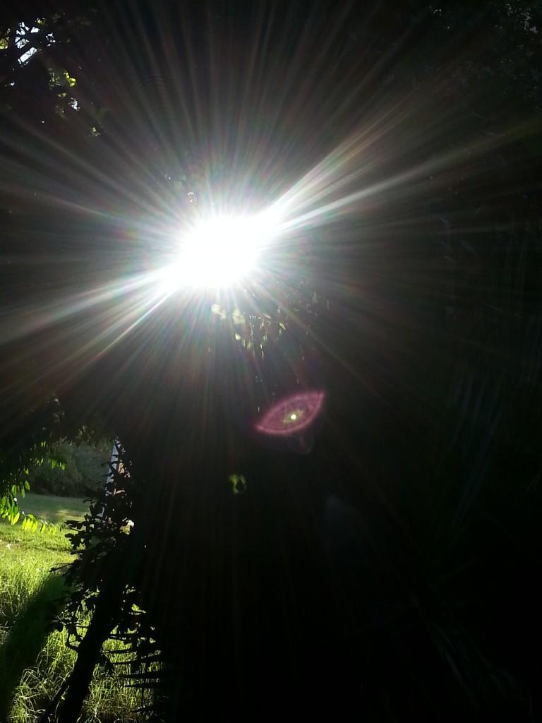 שפירית אור